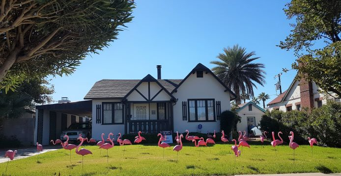 50 pink plastic flamingos in grass front yard